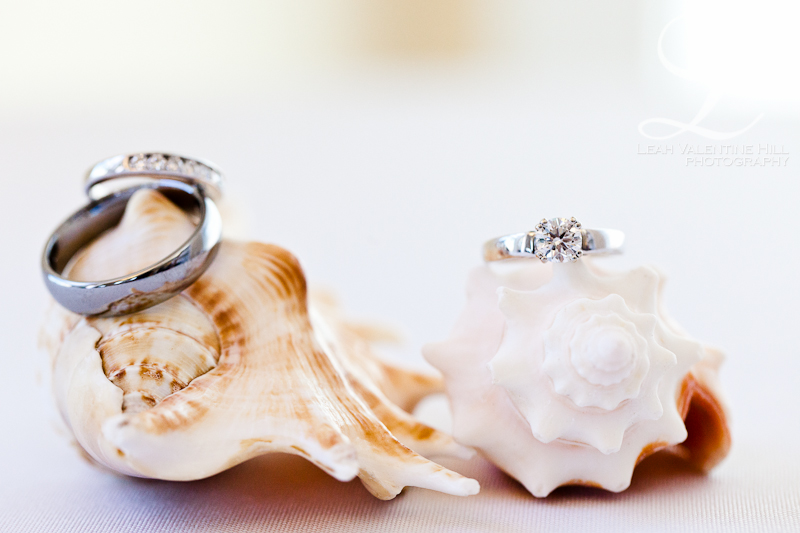 macro photo of wedding rings on seashells in nags head, nc