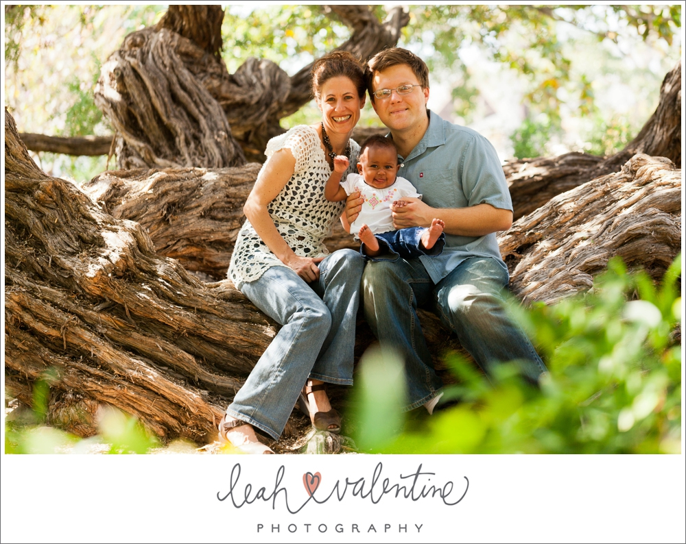 family portraits sitting on an old tree at alice keck park in santa barbara ca